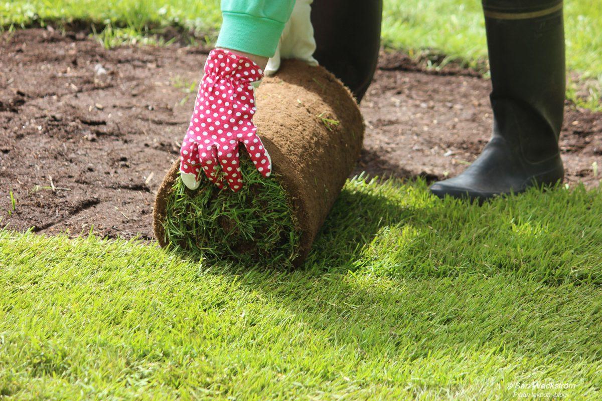 Miten onnistui siirtonurmikko vanhan nurmikon päälle