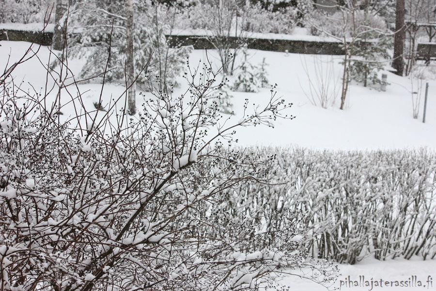 Piha talvella kaunis