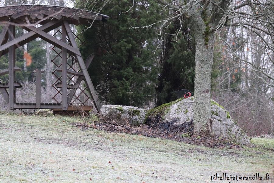 Toiveet ja unelmat pihasuunnittelussa kuten oleskelupaikka ja terassi. Kuvassa vastakkain istuttava keinu ison kiven ja puun vieressä.