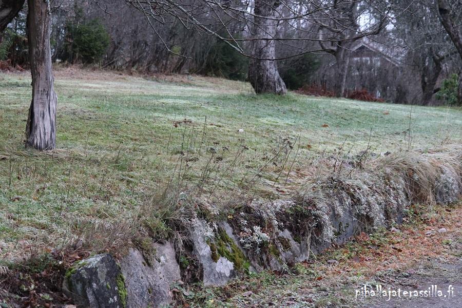 Vanhan pihan esittely ja sen historiaa. Kuvassa näkyy noin 30 cm korkea luonnonkivimuuri ja nurmikkoa.