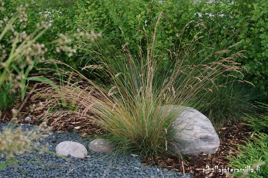 Isot kivet pihalla ja kasvialueilla tuovat ilmettä. Kuvassa kukkiva heinä, jonka takana on noin 30 cm kivi ja edessä pienempiä kiviä.