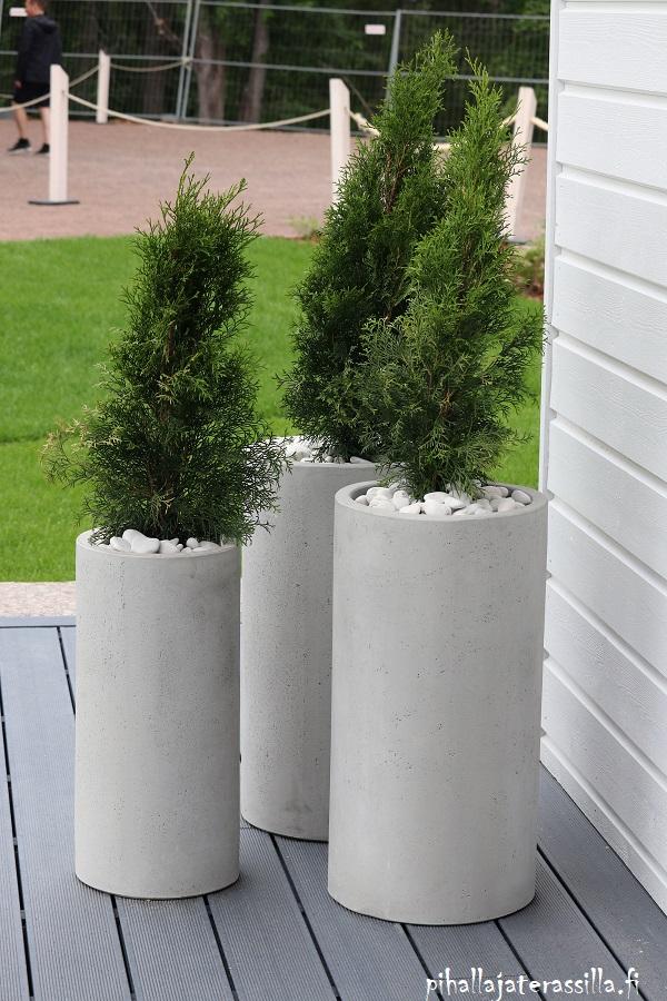 Monivuotiset kasvit ruukussa tuovat näin viihtyisyyttä terassille. Kuvassa kapeat ja korkeat pyöreät ruukut, jotka näyttävät betonista tehdyiltä. Mullan pinnalla valkoisia kiviä. Ruukuissa pieniä kapeita tuijia.