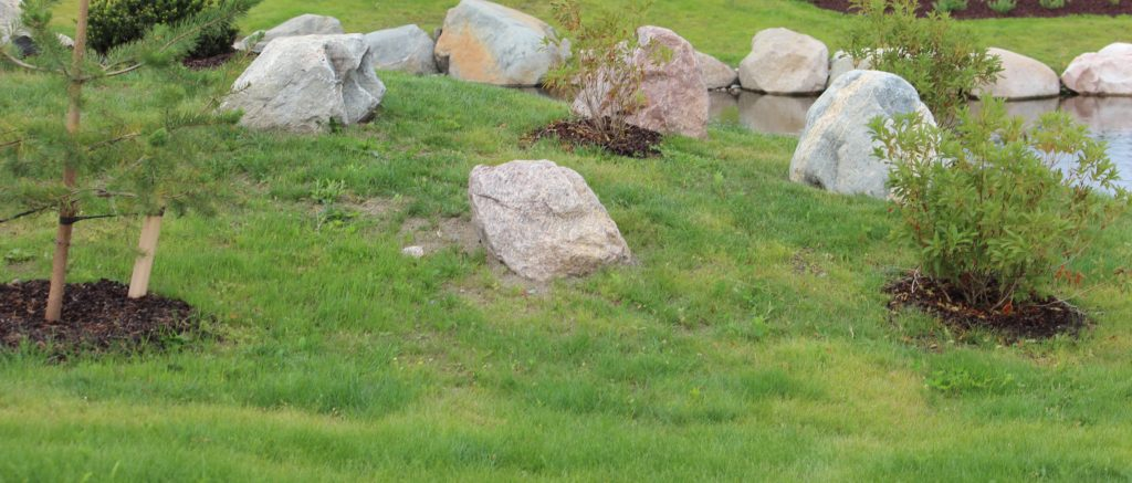 Top5 virhettä pihan suunnittelussa, kasvit ripoteltu pitkin pihaa. Kuvassa nurmikolla kiviä ja kasveja siellä täällä noin 1,5 m välein.