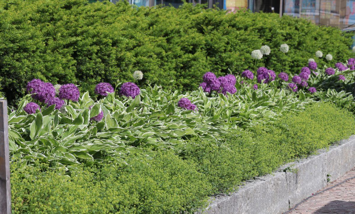 Pallomuotoja kukissa – trendikästä
