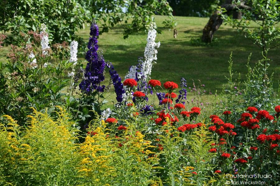 Värien valintaa pihasuunnitelmaan ja kasviryhmien suunnitteluun. Kuvassa vahvan punaisia palavanrakkauden kukkia, sinisiä ja valkoisiä pitkiä kukkaterttuja jaloritarinkannusta sekä keltaista piiskua etualalla.