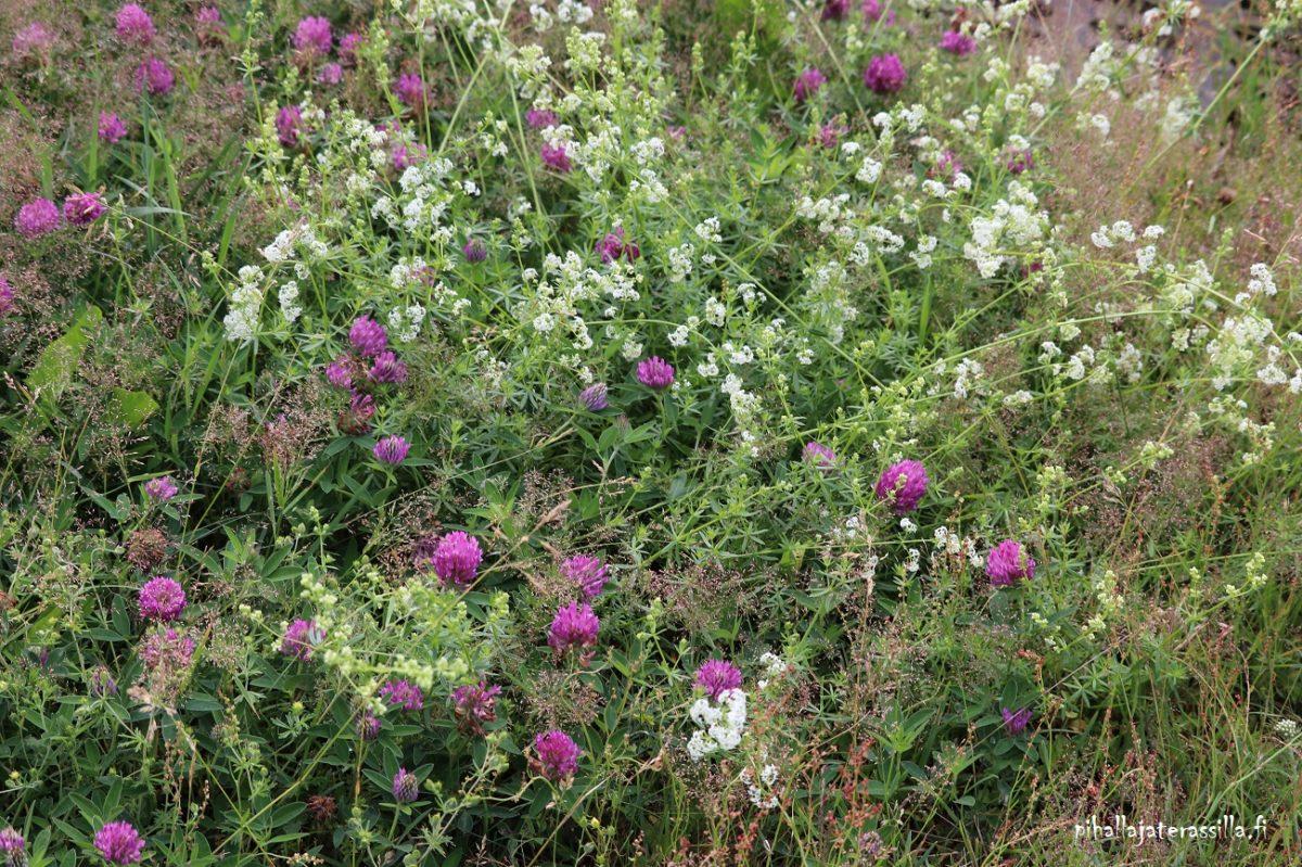 Kukkaketo vai kukkaniitty